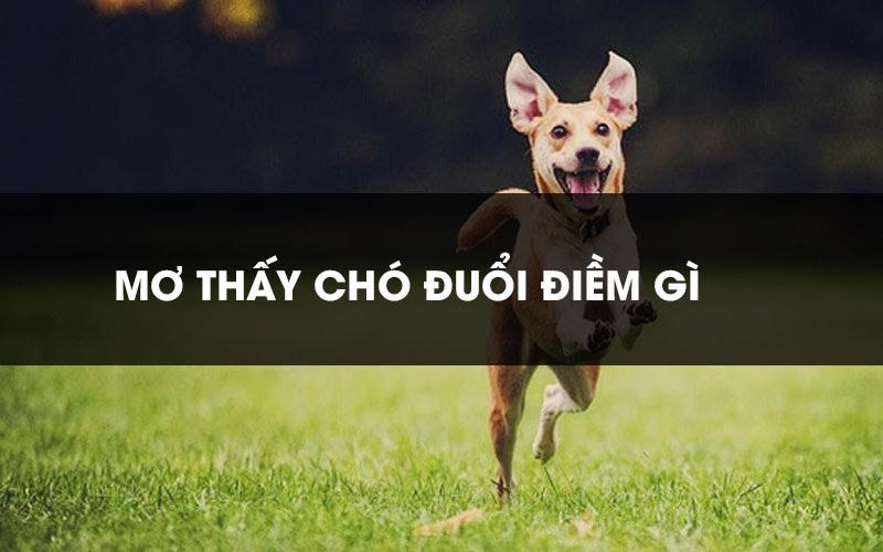 Giải mã giấc mơ thấy chó đuổi là điềm báo gì