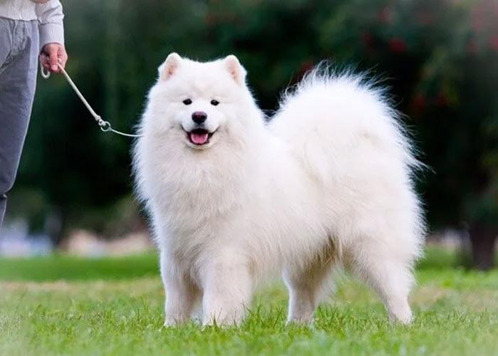 Ngủ mơ thấy mình nhặt được chó trắng