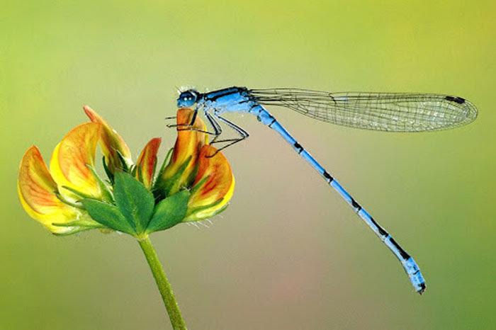 Mơ thấy côn trùng bay