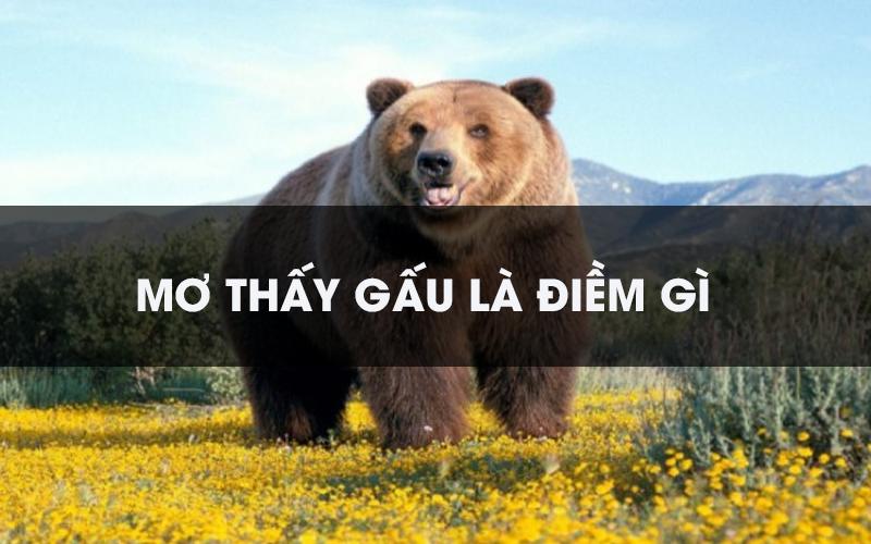 Nằm mơ thấy gấu đánh con gì may mắn, điềm báo tốt hay xấu