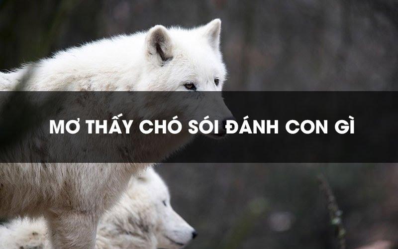 [Giải mã] Nằm mơ thấy chó sói đánh con gì trúng giải độc đắc