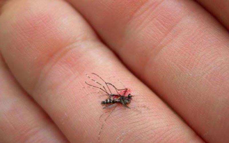 Mơ thấy muỗi chết điềm gì