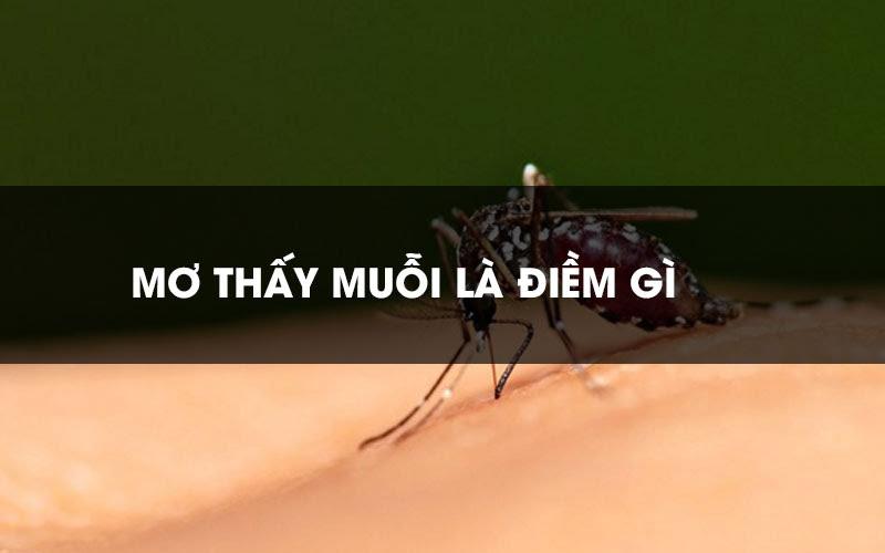 Ngủ mơ thấy muỗi đánh con gì