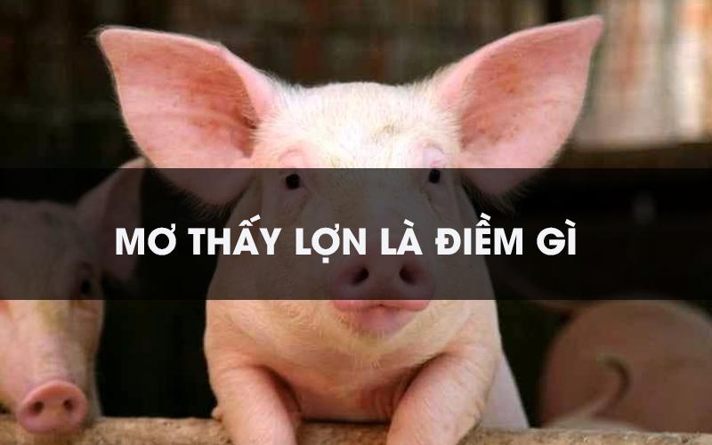 [Giải mã] Nằm mơ thấy lợn đánh con gì, số gì trúng giải thưởng độc đắc