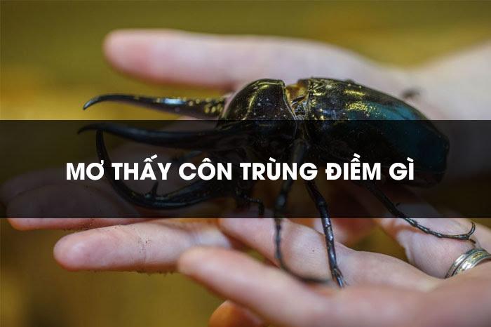 Nằm mơ thấy côn trùng là điềm gì, đánh con gì trúng lớn