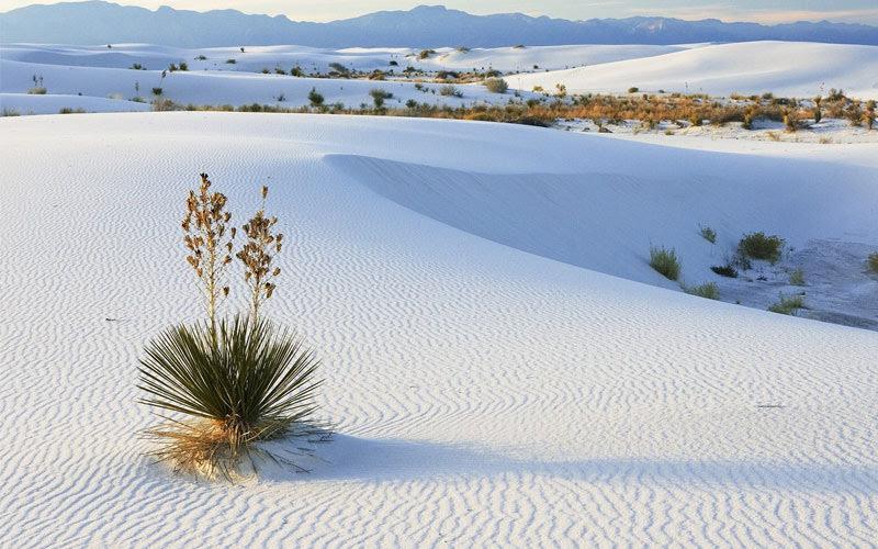 Nằm mơ thấy cát trắng