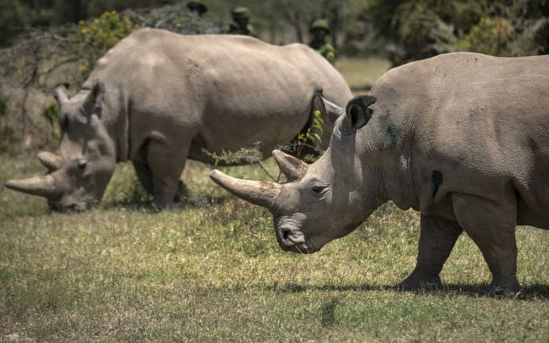 Nằm mơ thấy tê giác đánh con gì, số mấy để may mắn nhất